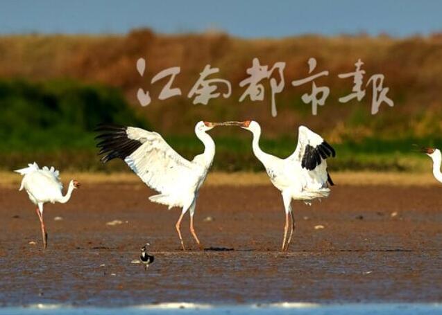 安排!35万只候鸟飞抵鄱阳湖